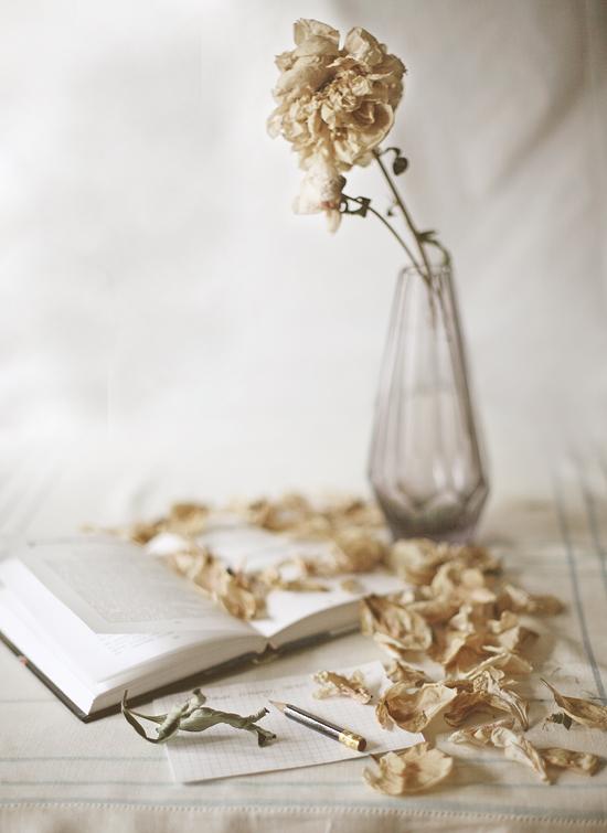 отцвели уж давно хризантемы в саду картинки