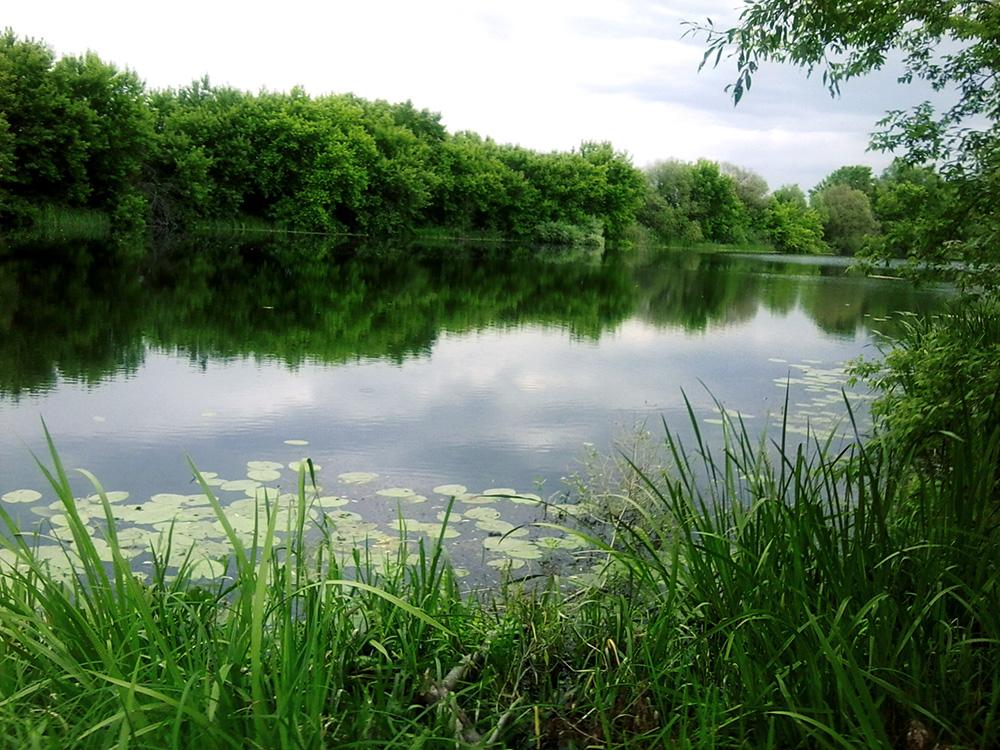тихая заводь картинки река озеро нише гкл это
