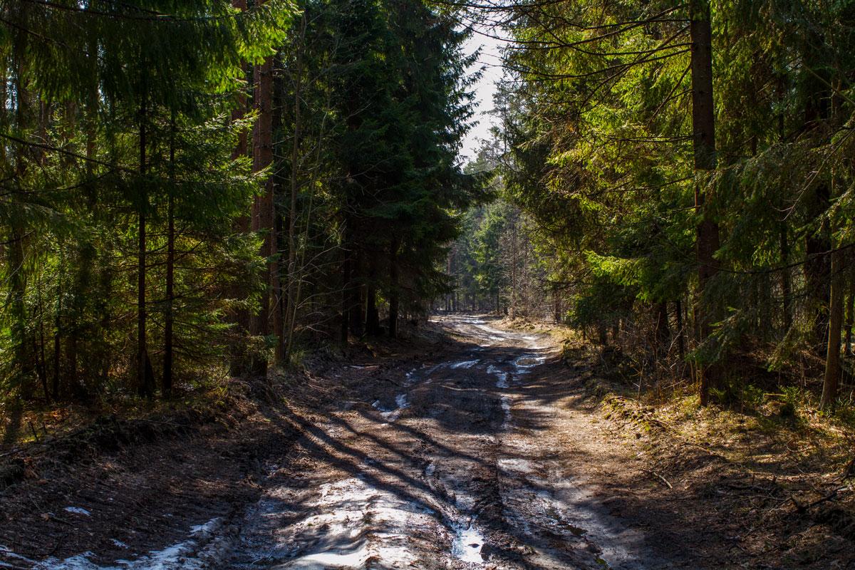 Фото поле и лес