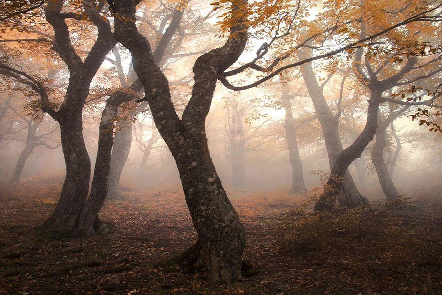 http://club.foto.ru/gallery/images/photo/2013/12/09/2238351.jpg