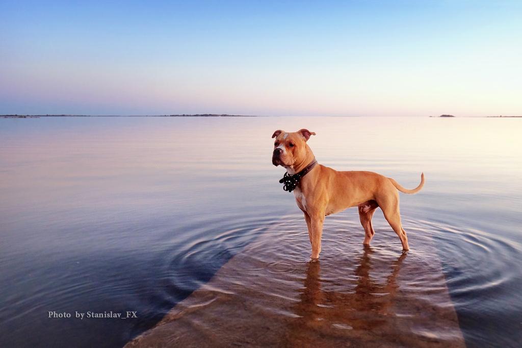 Лучшие фотографы саратова сложно выбрать