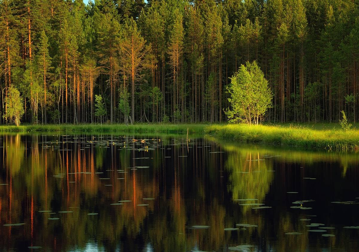 http://club.foto.ru/gallery/images/photo/2014/05/19/2288291.jpg