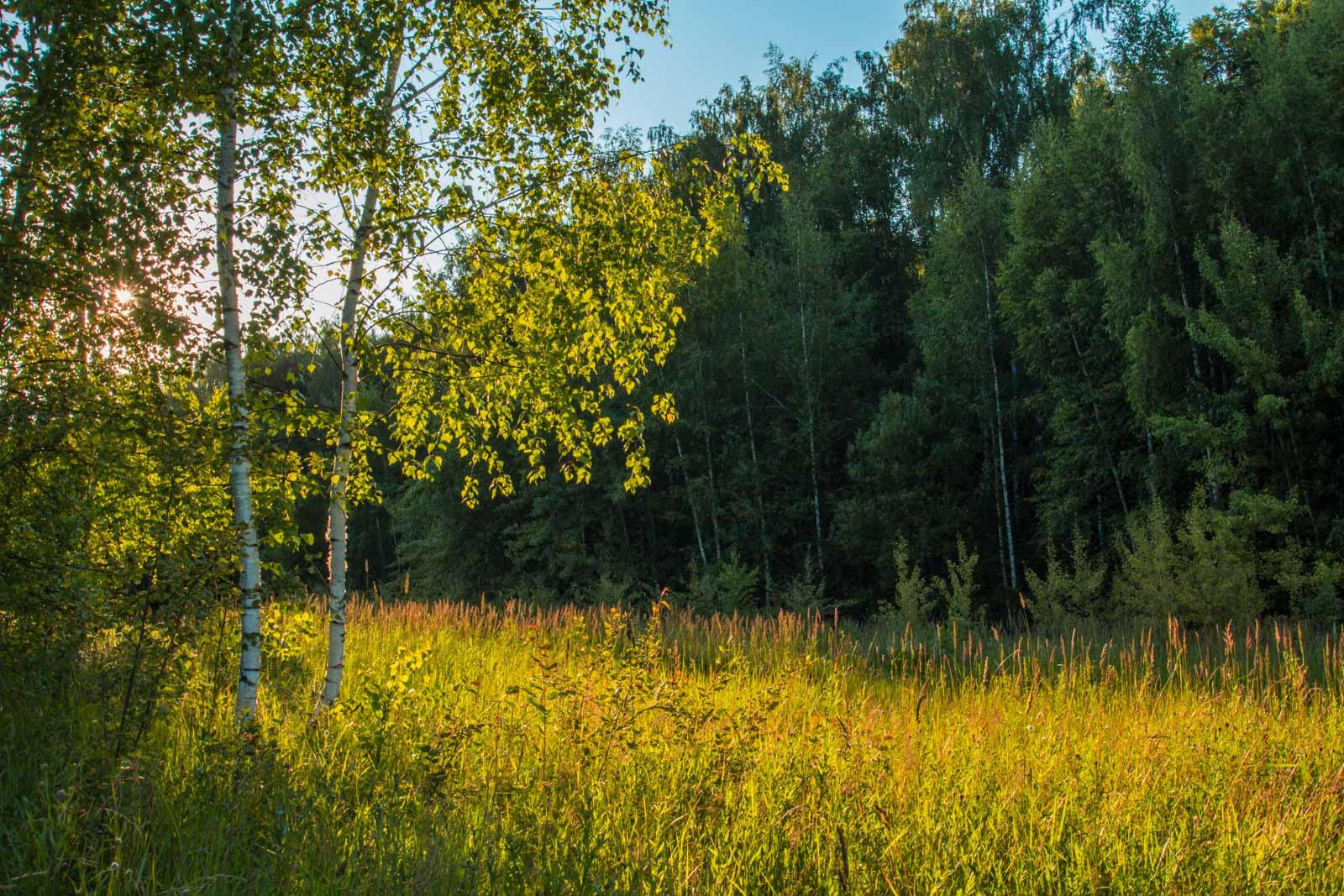 http://club.foto.ru/gallery/images/photo/2014/07/10/2303902.jpg