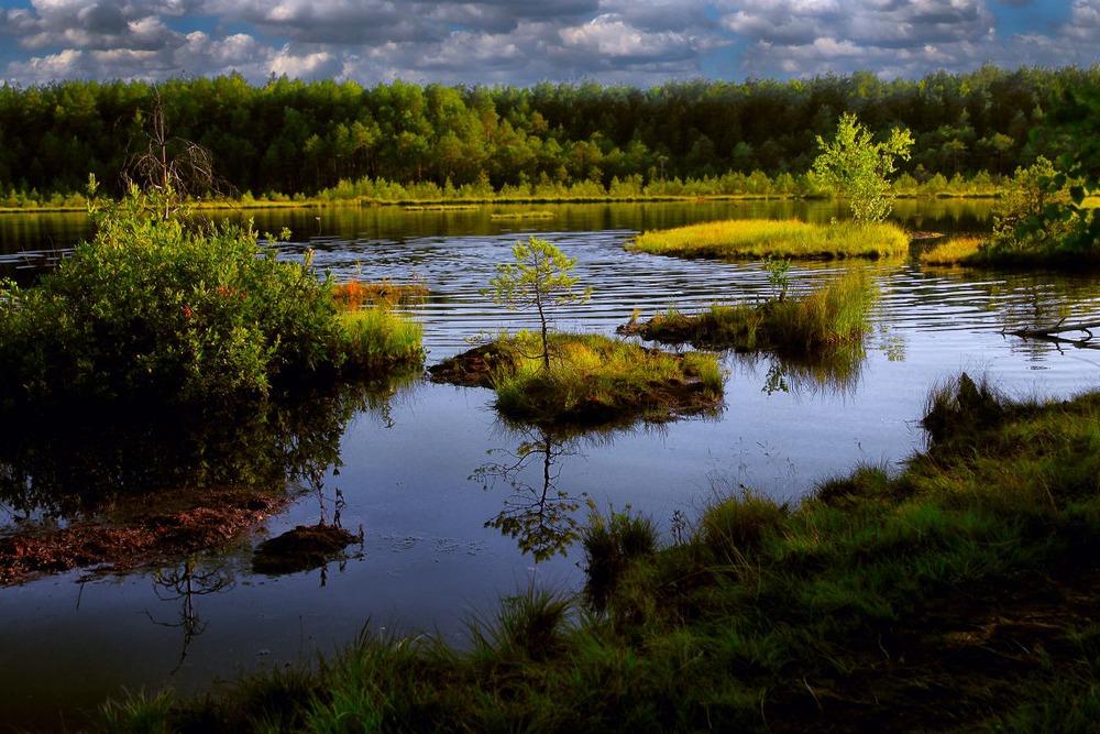http://club.foto.ru/gallery/images/photo/2014/08/31/2317148.jpg