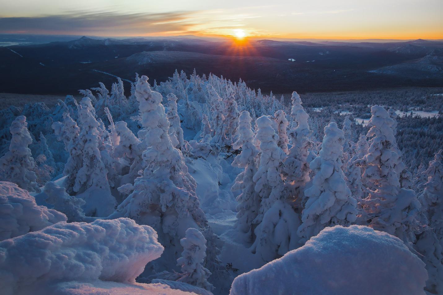 Зимняя тайга картинки