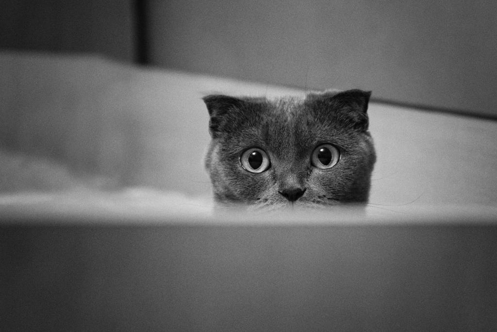 Стрелец, картинки виноватая кошка