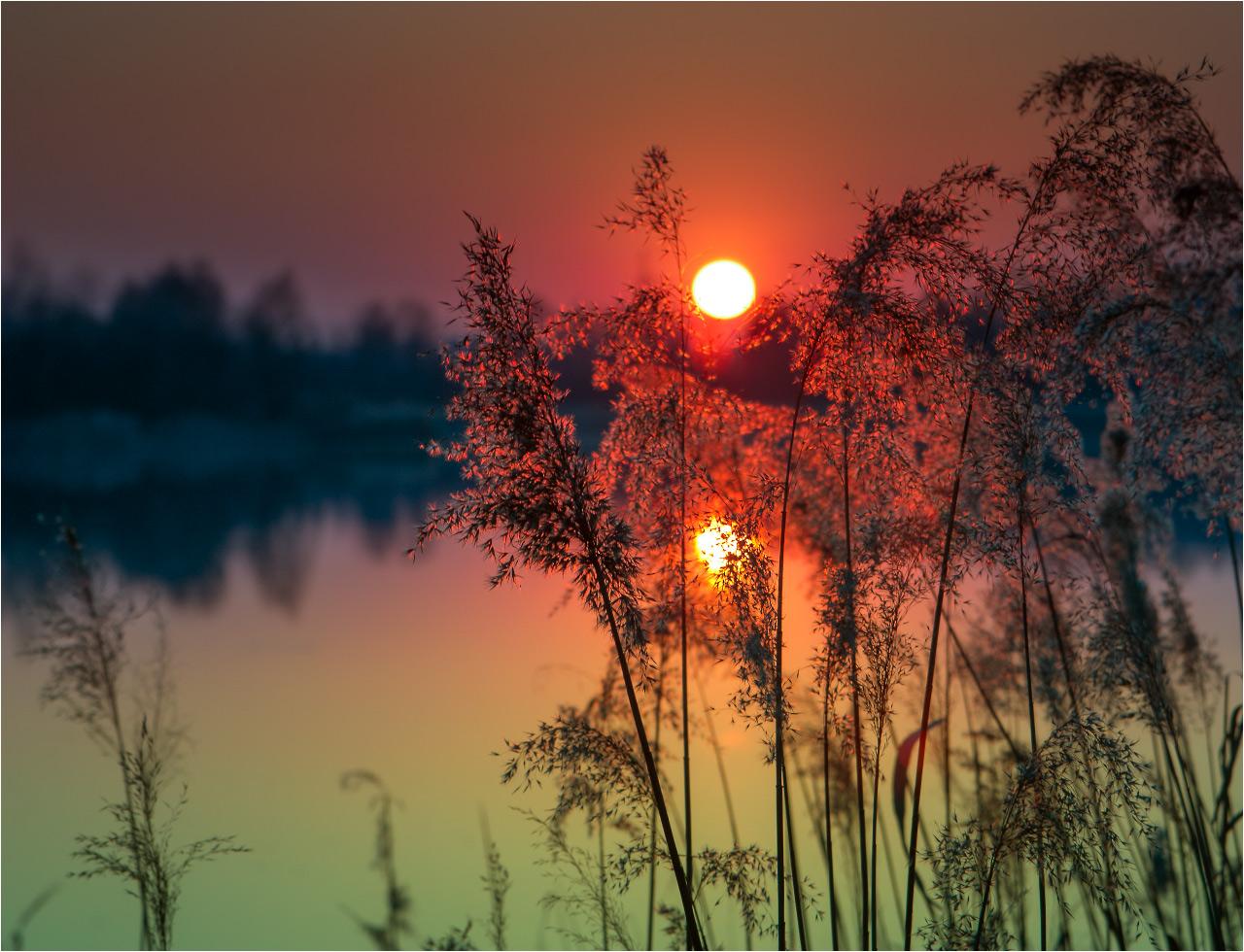 Картинки нежного заката