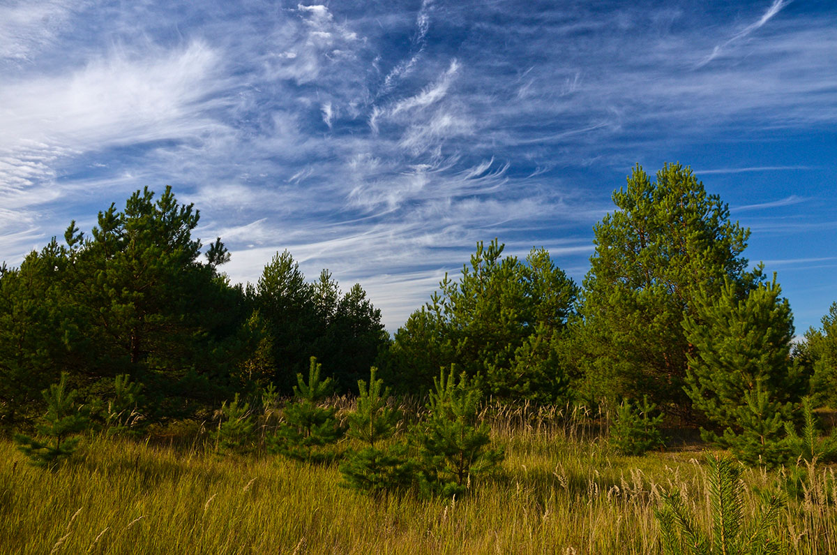 солнце пустыни картинки лесных опушек фонда