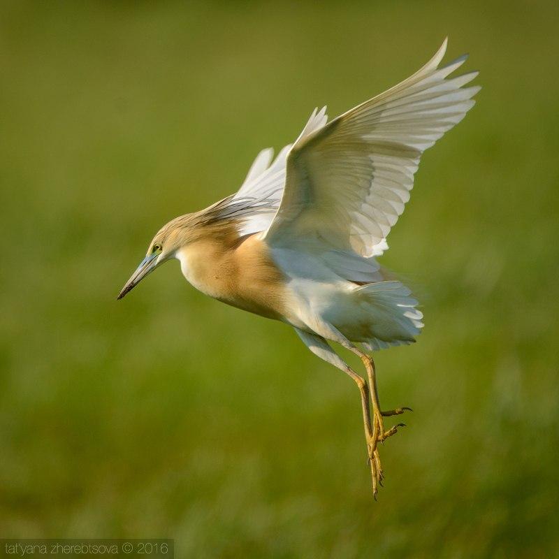 Определитель птиц онлайн  pticiinfo