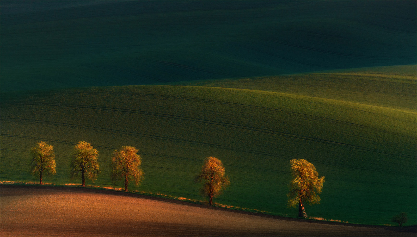 Shadows on the fields....