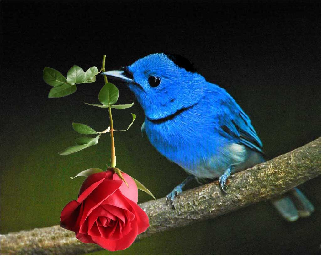 Картинки птичек счастья