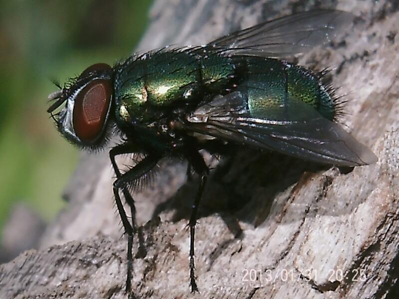 экономичная живые картинки мухи навага известна своими