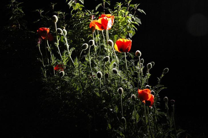 Фото ночью цветы