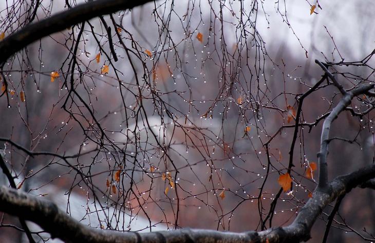 Картинки девушка осень дождь