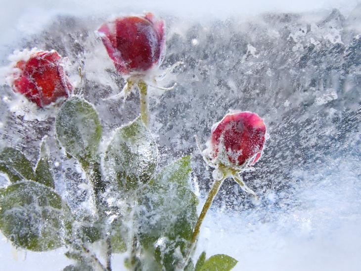 Зима, холод в картинках  1256312