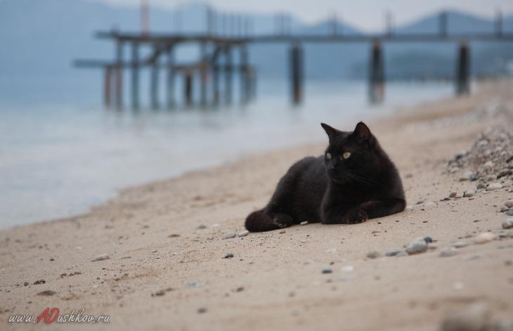 Котики на пляже фото