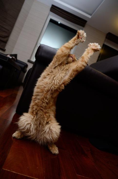 Картинки танцующий кот