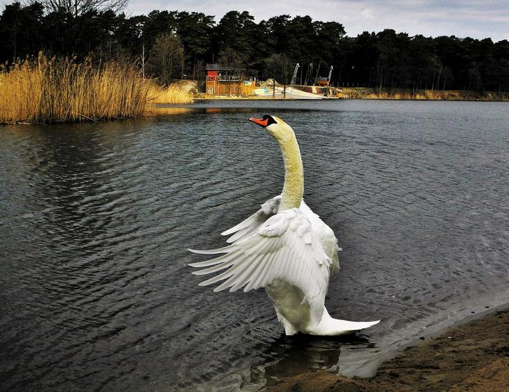 Svetlana (Pipa) :: Утренняя гимнастика... :: ФотоОхота ... Утренняя Гимнастика