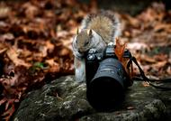 fluffy photographer