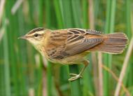 ...Беларуси на всех известных на территории Беларуси местах гнездования этого вида птиц.