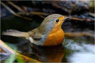 Водопой-купальня для птиц своими руками.