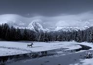Black Horse & White Snow