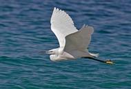 Page tags:цапля птица фото biofileru,птицы сибири travelsiberiaru