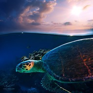 Sunset sea turtle (Willyam Bradberry)