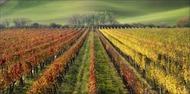 / The Wine Line /